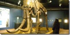 Al tempo dei mammut